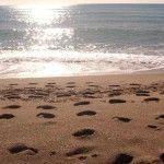 Leer playas para pescar III: profundidad y algas